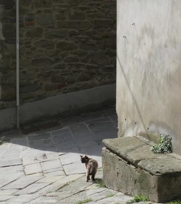 cortona cat